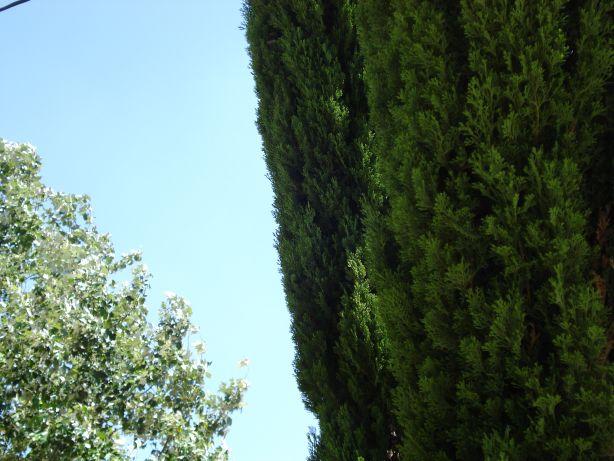 Trees & Sky