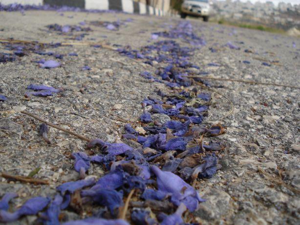 Purple Petals 1