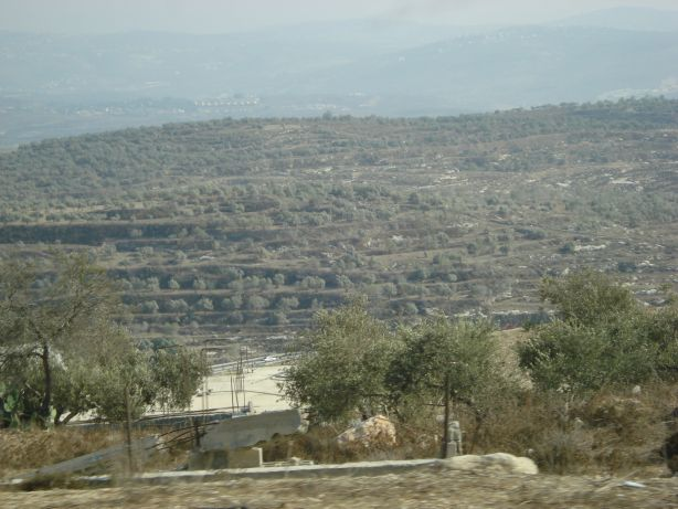 Jenin Olive Fields 2