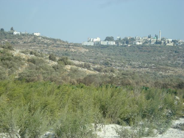 Jenin Olive Fields 3